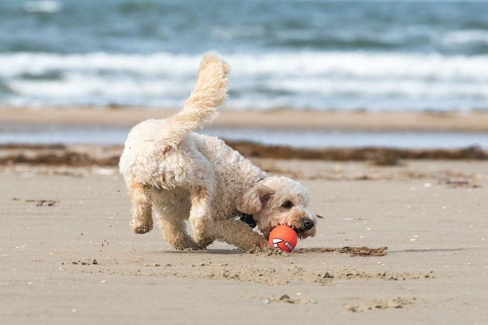 Jadranje s psom - 8 nasvetov, kako psu pomagati, da postane morski pes 4