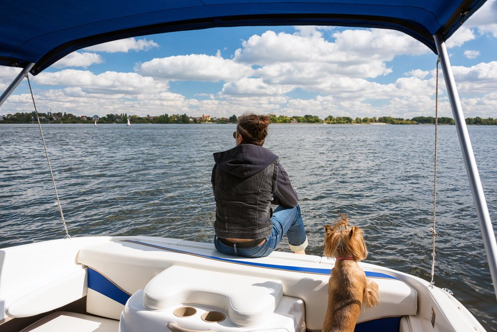 Jadranje s psom - 8 nasvetov, kako psu pomagati, da postane morski pes 5