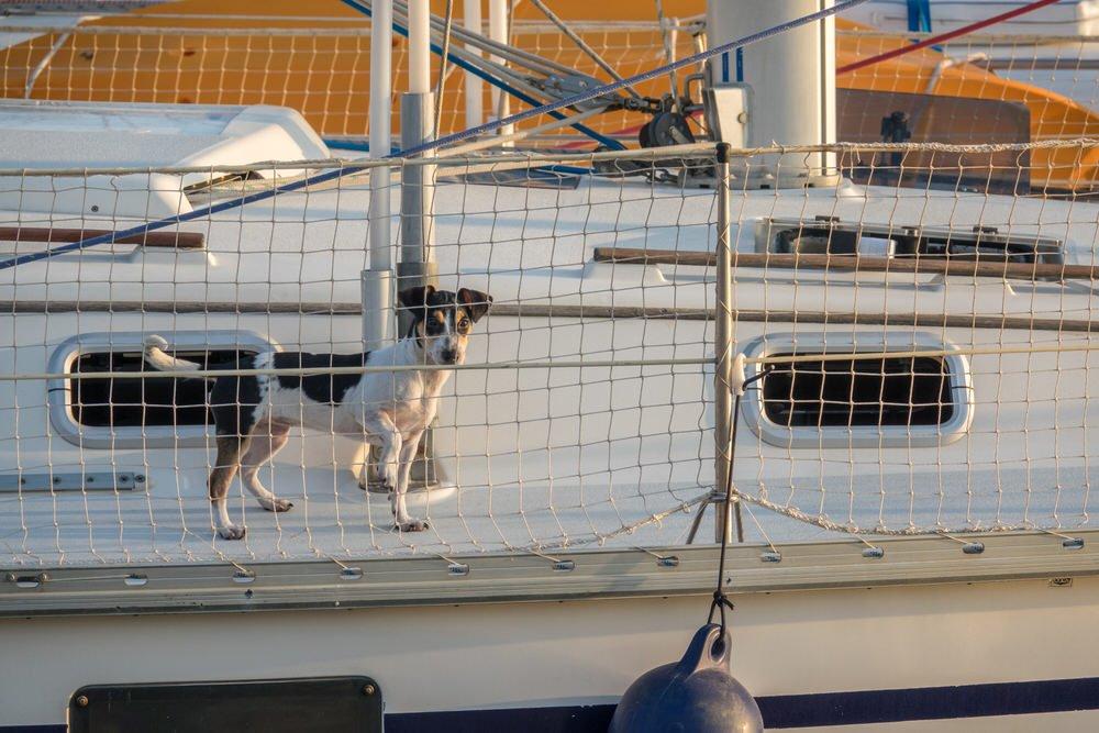 Jadranje s psom - 8 nasvetov, kako psu pomagati, da postane morski pes 6