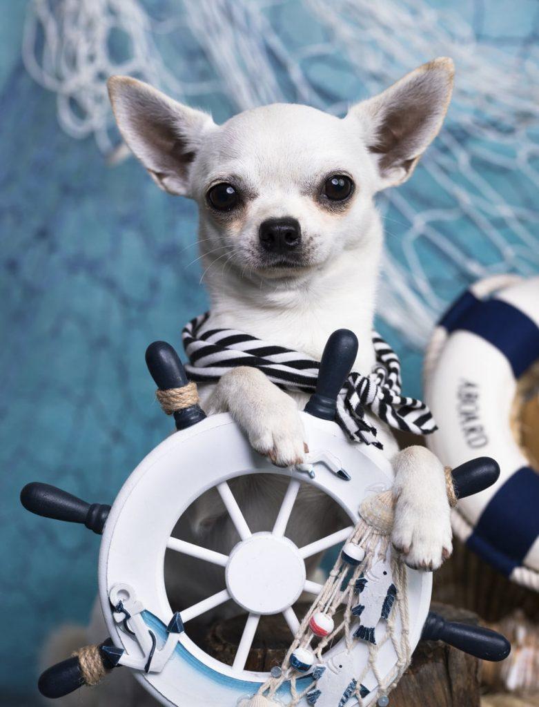 Jadranje s psom - 8 nasvetov, kako psu pomagati, da postane morski pes 7